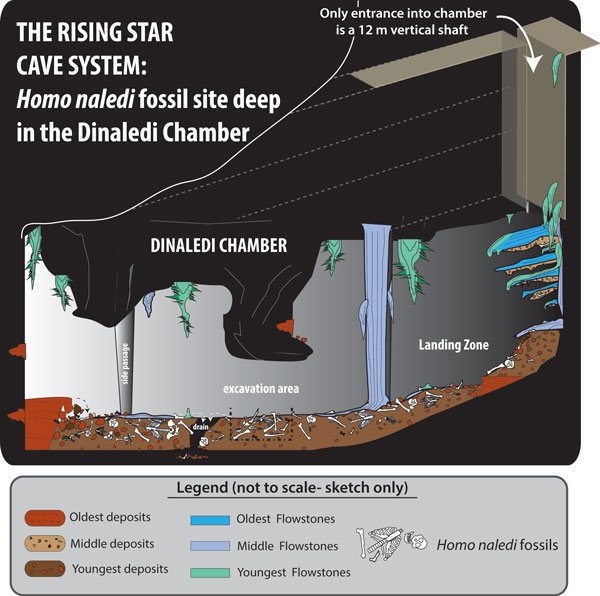 An illustrated representation of the Dinaledi Cave where the homo naledi fossils were found. (Image: Wits University)